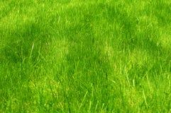 Świeża zieleń robiący manikiur gazonu zakończenie up Obcięty zielonej trawy tło Zielony gazonu tło fotografia stock