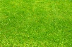 Świeża zieleń robiący manikiur gazonu zakończenie up Obcięty zielonej trawy tło Zielony gazonu tło zdjęcia royalty free