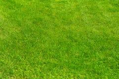 Świeża zieleń robiący manikiur gazonu zakończenie up Obcięty zielonej trawy tło Zielony gazonu tło obraz royalty free