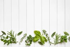 Świeża ziele granica Fotografia Stock