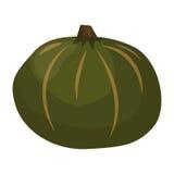 Świeża zielona dyniowa jarzynowa wektorowa ilustracja Zdjęcia Stock