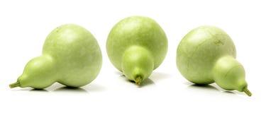 świeża zielona gurda zdjęcie stock