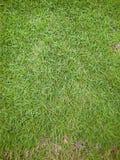 Świeża zielona Japan włosiana trawa zdjęcia stock