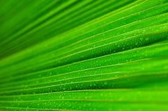 Świeża zielona liść wody kropla zdjęcie stock