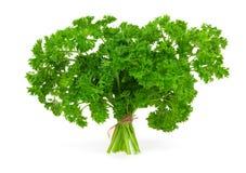 Świeża zielona pietruszka Obraz Stock