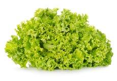 Świeża zielona sałata obraz royalty free