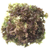 Świeża zielona sałata odizolowywająca Obrazy Stock