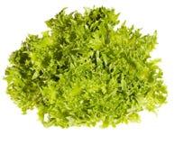 świeża zielona sałatka obrazy royalty free