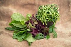 Świeża zielona sałatka, szpinak i arugula, Obraz Stock