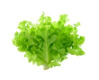 Świeża zielona sałaty sałatka odizolowywająca na białym tle Obrazy Stock