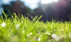 Świeża zielona trawa zdjęcia royalty free