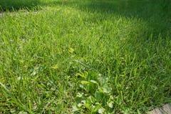 Świeża zielona trawa, natury tło Zdjęcie Stock