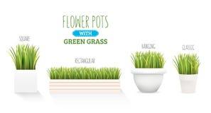 Świeża zielona trawa w garnku Set z kilka formami garnki Element domowy wystrój Symbol przyrost i ekologia Zdjęcia Stock