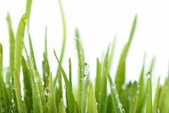 Świeża zielona trawa z wody kroplą Obrazy Royalty Free