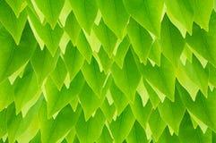 Świeża zielona urlop tapeta Fotografia Stock