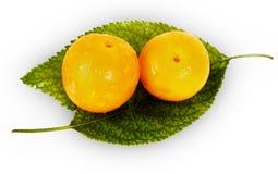 Świeże żółte śliwki na zielonych liściach Obraz Stock