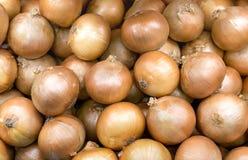 Świeże żółte cebule - złota cebuli uprawa surowi warzywa karmowi wewnątrz obrazy royalty free