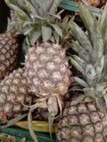 świeże ananasy Zdjęcia Stock