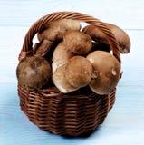 Świeże borowik pieczarki Fotografia Stock