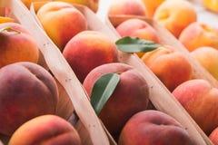 świeże brzoskwinie Zdjęcia Stock