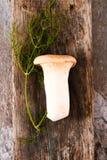 Świeże całe biel pieczarki lub agaricus, w pucharze na wieśniaku Zdjęcia Stock