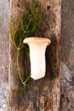 Świeże całe biel pieczarki lub agaricus, w pucharze na wieśniaku Fotografia Royalty Free