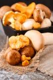 Świeże całe biel pieczarki lub agaricus, w pucharze na wieśniaku Obrazy Stock