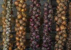 Świeże cebule Zdjęcia Royalty Free