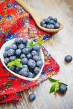 Świeże czarne jagody w białym pucharze Obraz Stock