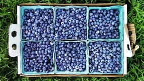 Świeże czarne jagody w pudełkach Fotografia Stock