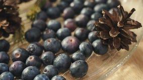 Świeże czarne jagody z pinecones i jedlinowymi gałąź, dolly strzał zbiory