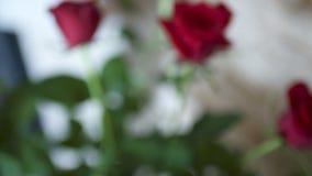 świeże czerwone róże zbiory wideo