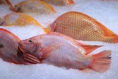Świeże denne ryba na zdruzgotanym lodzie, zakończenie obraz royalty free