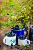 Świeże dojrzałe bluberries borówki w emaliowych kubkach obraz royalty free