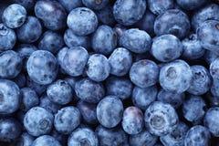 Świeże dojrzałe czarnych jagod jagody obraz royalty free