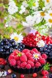 Świeże dojrzałe lato jagody - malinka w przedpolu, czerni a obraz royalty free