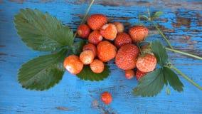 Świeże, dojrzałe, soczyste truskawki, Czerwona truskawka HD zbiory