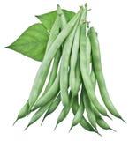 Świeże fasolki szparagowe odizolowywać na bielu zdjęcie stock