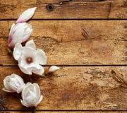 Świeże fragrant wiosen magnolie fotografia royalty free