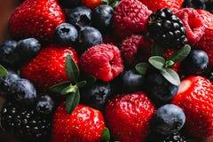 Świeże i soczyste lasowe jagody Fotografia Stock