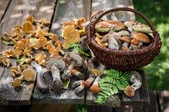 Świeże i zdrowe dzikie pieczarki pełno smak i aromatyczny zdjęcie royalty free