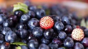 Świeże i zdrowe lasowe jagody Fotografia Royalty Free