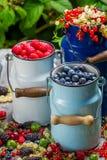 Świeże jagodowe owoc w kierzance Zdjęcia Royalty Free
