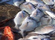 świeże jedzenie morza Fotografia Royalty Free