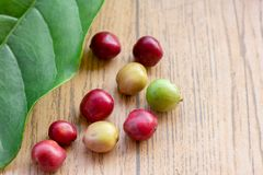 Świeże kawowe fasole na drewno stole, czerwona owoc z kofeiny addicti obrazy royalty free