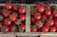Świeże kolorowe dojrzałe pomidor jesieni relikwie Mali czerwoni czereśniowi pomidory w łozinowym rattan koszu, odgórny widok, hor obraz royalty free
