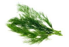 świeże koperkowy zioła Zdjęcie Stock