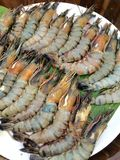 świeże krewetki Fotografia Stock