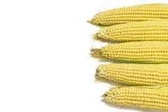 Świeże kukurudze odizolowywać na białym tle z kopii przestrzenią Obraz Stock