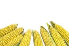 Świeże kukurudze odizolowywać na białym tle z kopii przestrzenią Zdjęcia Royalty Free
